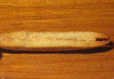 ラングドシャチョコサンドクッキー(はちみつレモン)6