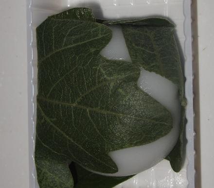 北海道産きたろまん小豆使用 柏餅(こしあん)
